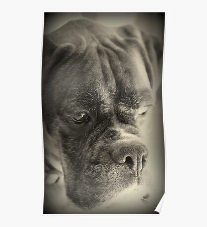 Warten auf meine Treat - Boxer Dogs Series Poster