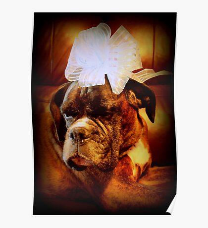 Boxer-Hund mit Bogen - Boxer-Hunde-Serie Poster