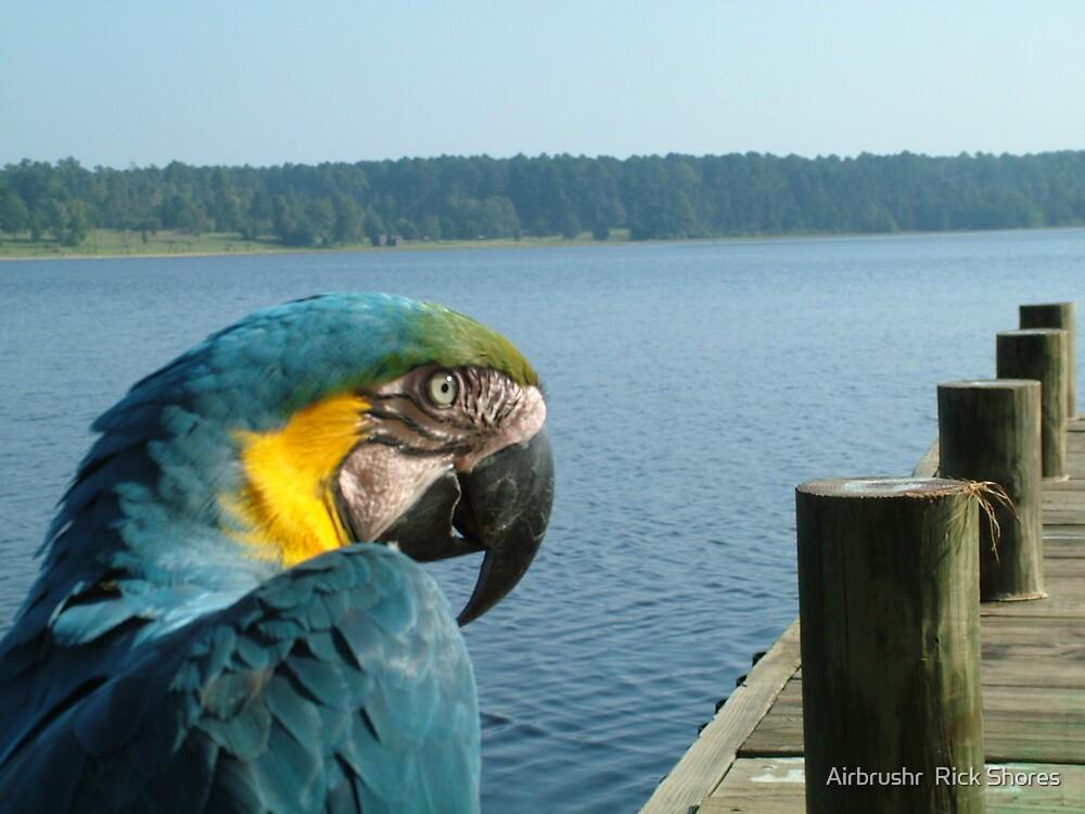 pet bird Buster by Airbrushr  Rick Shores