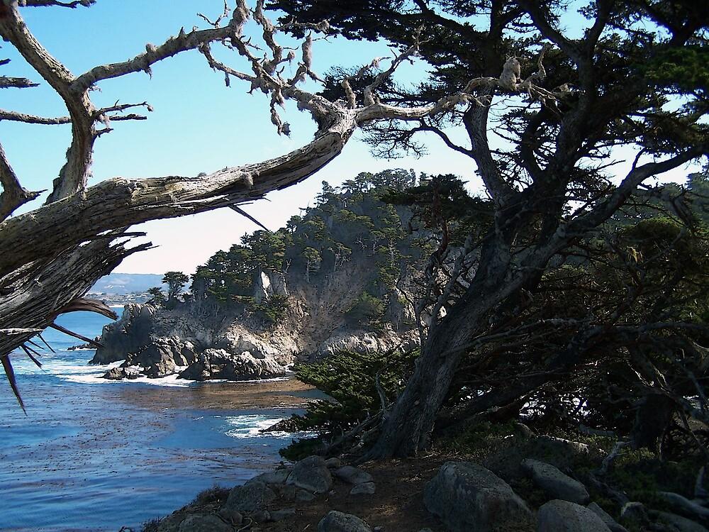 Californian Coastline 2 by Christopher  Cooper