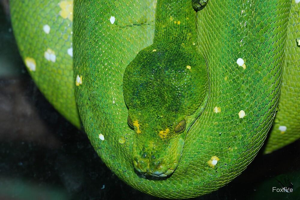 Green Tree Python - Malaysia by Foxfire
