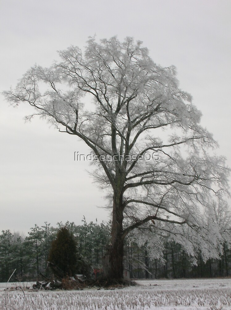 Winter Tree by lindseychase06