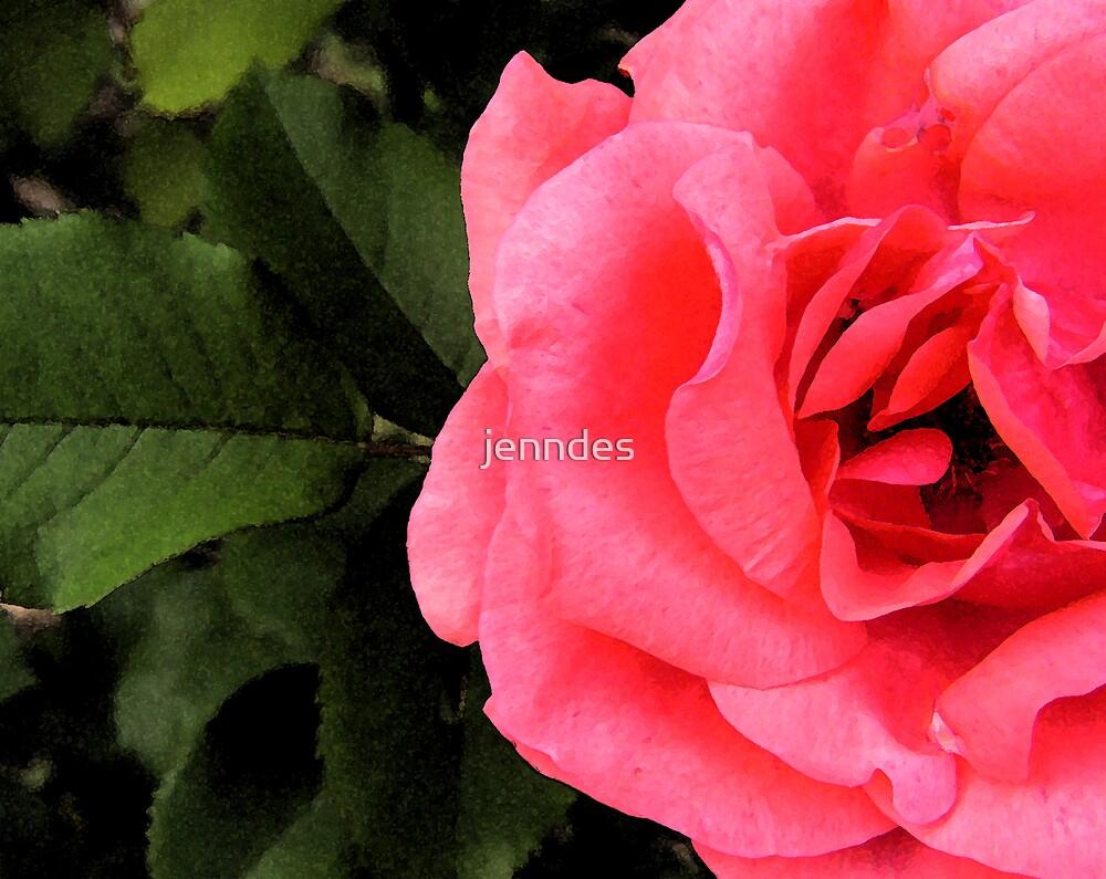 Coral Rose & Leaf by jenndes