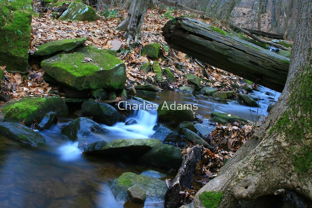 Miniature Rapids by Charles Adams