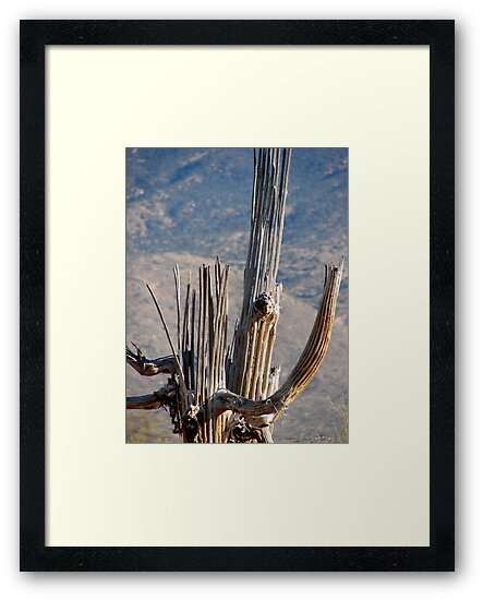 Death of a Saguaro by Trace Lowe