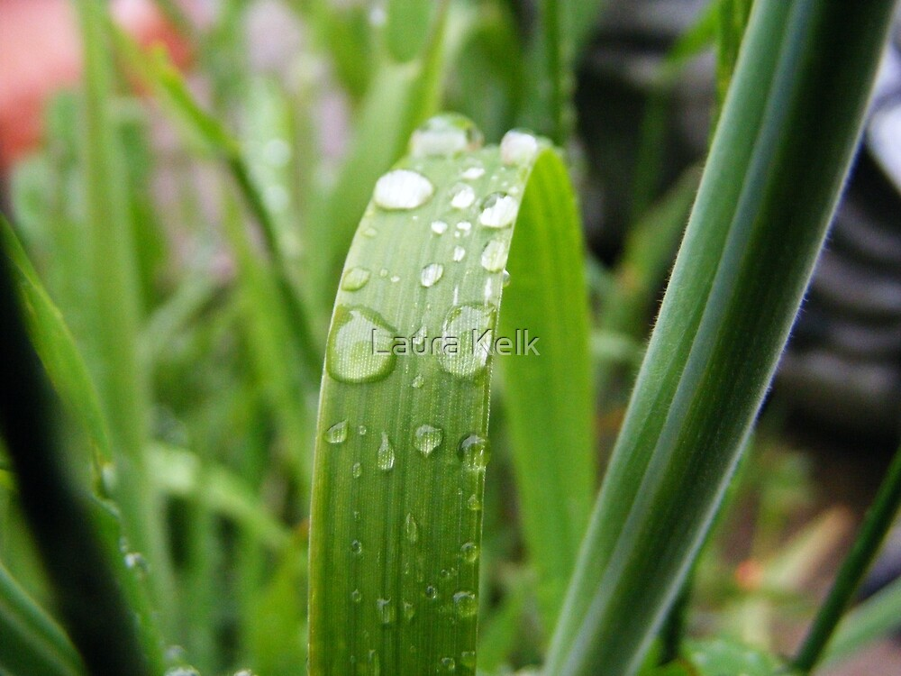 Grass by Laura Kelk