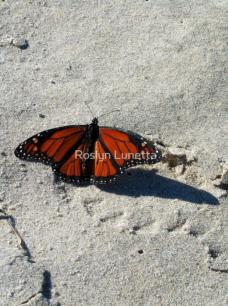 hardy Monarch by Roslyn Lunetta