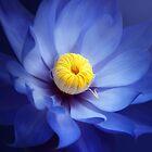 Blue Flower by Cliff Vestergaard