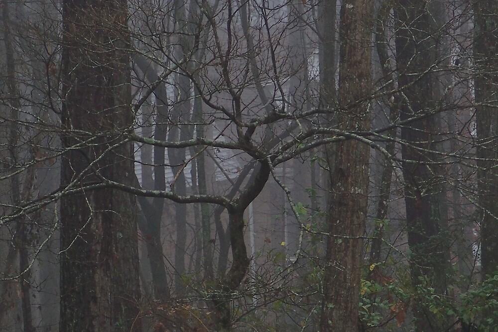 Winter Trees by islandpainter