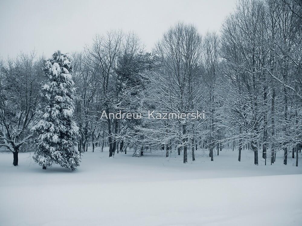 Quiet Forest by andykazie