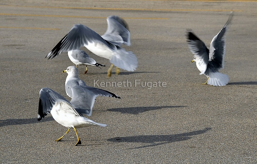 The Five Stages of Flight  by Kenneth Fugate