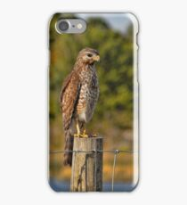 Red-shouldered Hawk On A Fence Post  iPhone Case/Skin