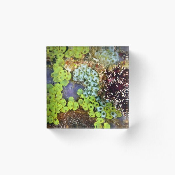 Potpourri Acrylic Block