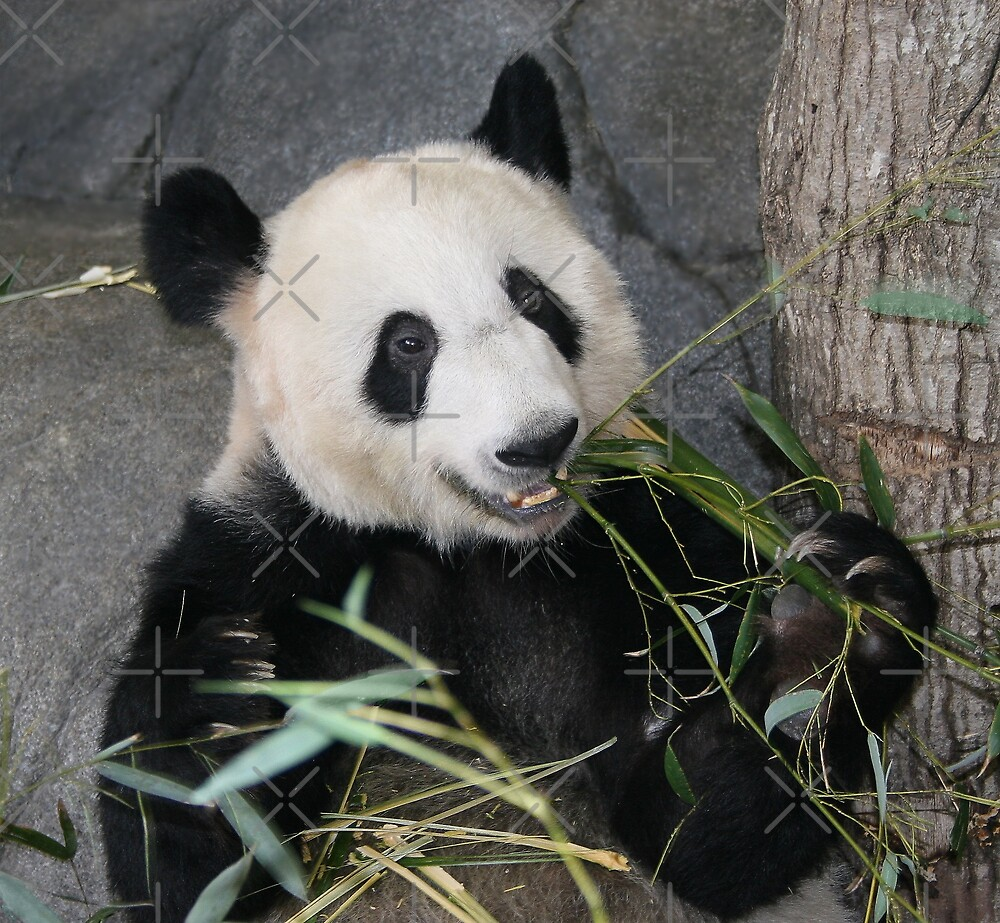 The Happy Panda by Lisa Putman