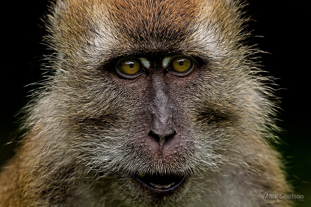 Monkey Portrait by Mark Snelson