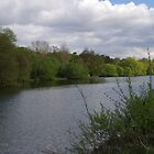 The River Thames At Pangbourne by lezvee
