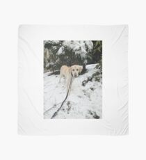 Yellow Lab in Snow Scarf
