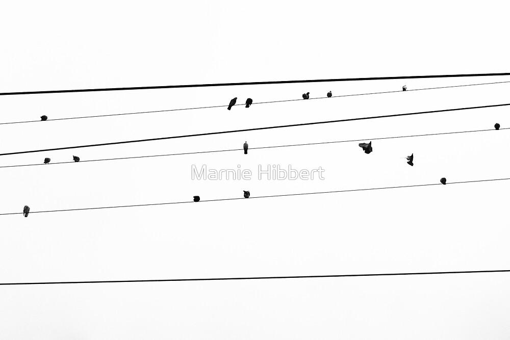 Pigeon Hangout by Marnie Hibbert