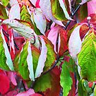 Autumn Leaves. Bright, Victoria by Roz McQuillan