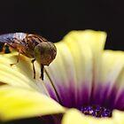 Bee  by Liz Worth