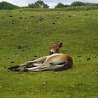 Pony Foal by lezvee