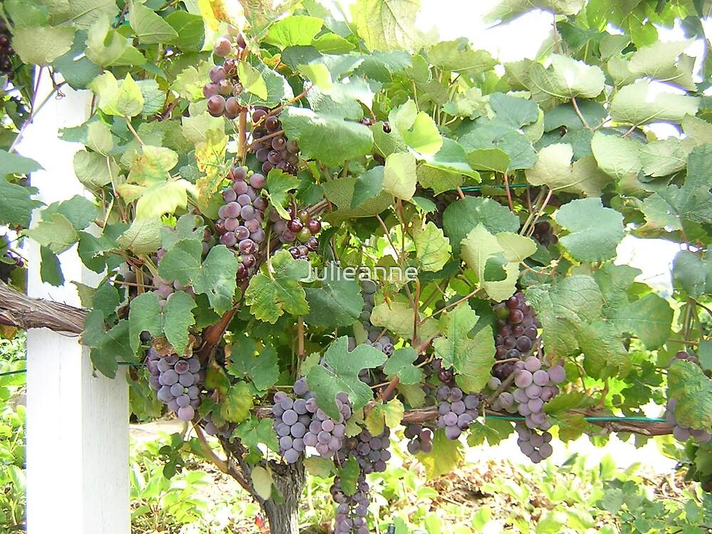 Abundant wine by Julieanne