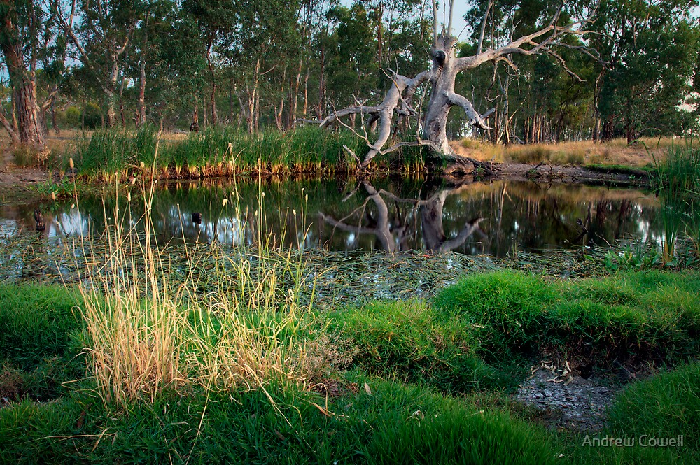 billabong by Andrew Cowell