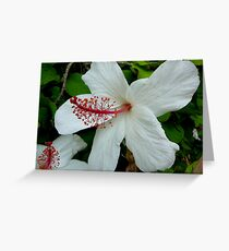 HIBISCUS IN VOLUMES Greeting Card