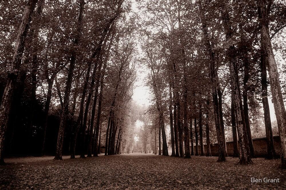 Follow the Light by Ben Grant