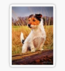 Carrie Southerton Photography - Jack Russell Terrier Sticker