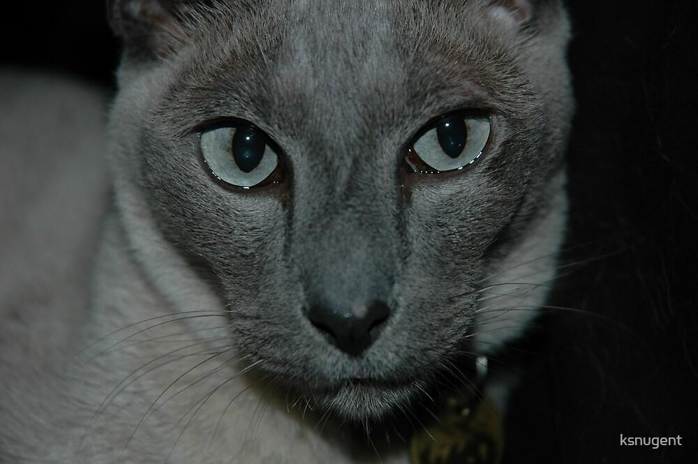 Eyes by ksnugent
