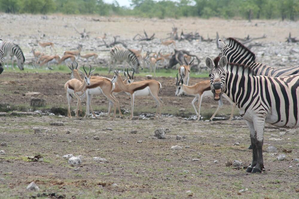 Namibian Zebras don't need dentists by lordploppy