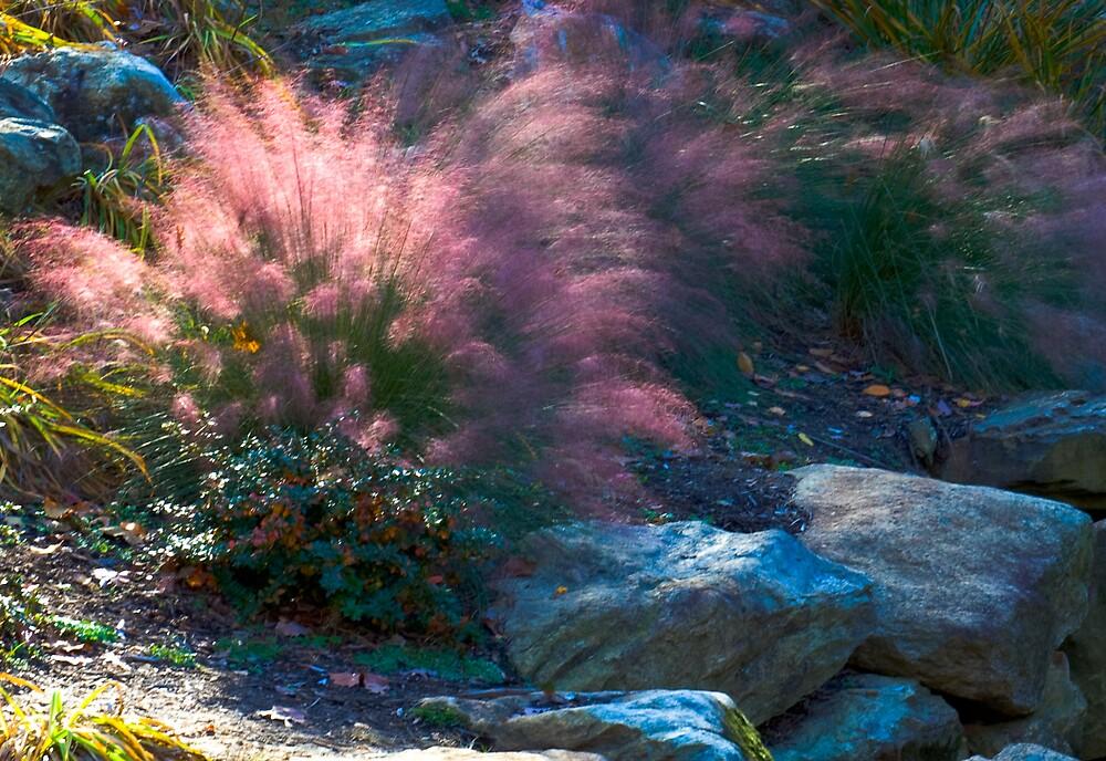 Pink Burst  by photogurl