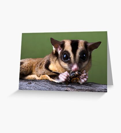 Sugar Glider Greeting Card