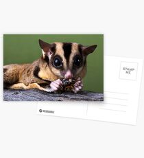 Sugar Glider Postcards