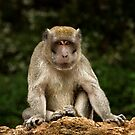 Long-tailed macaque by Frank Yuwono