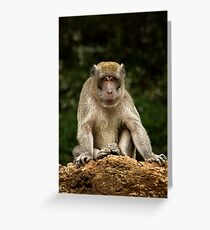 Long-tailed macaque Greeting Card
