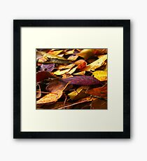 Fall Leaves Close Up Framed Print