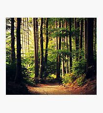 Woods Are Calling Photographic Print