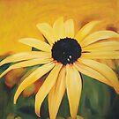 Sunny Daisy by Melissa Mailer-Yates