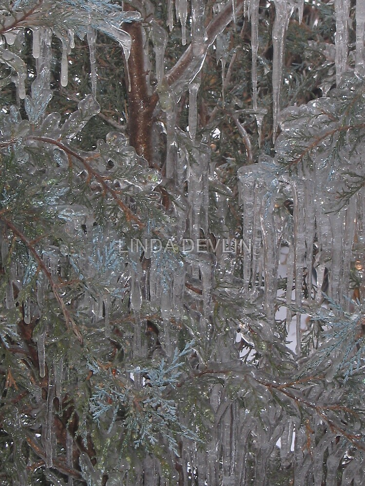 encapsulated in ice by LINDA DEVLIN