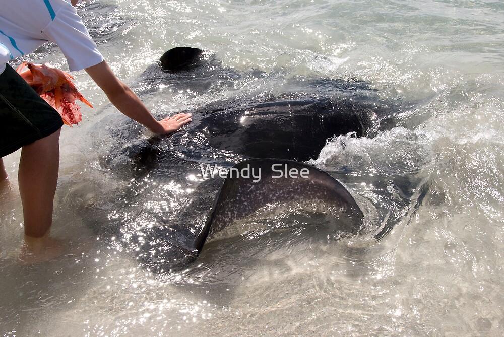 Stingrays of Hamelin Bay (ll) by Wendy  Slee
