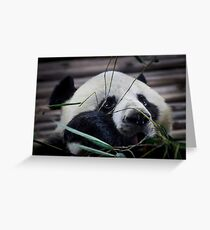 Hungry Panda Greeting Card