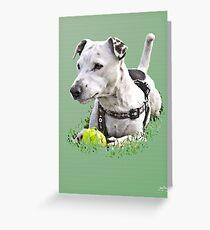 Jack : Jack Russel Terrier x Staffy Greeting Card