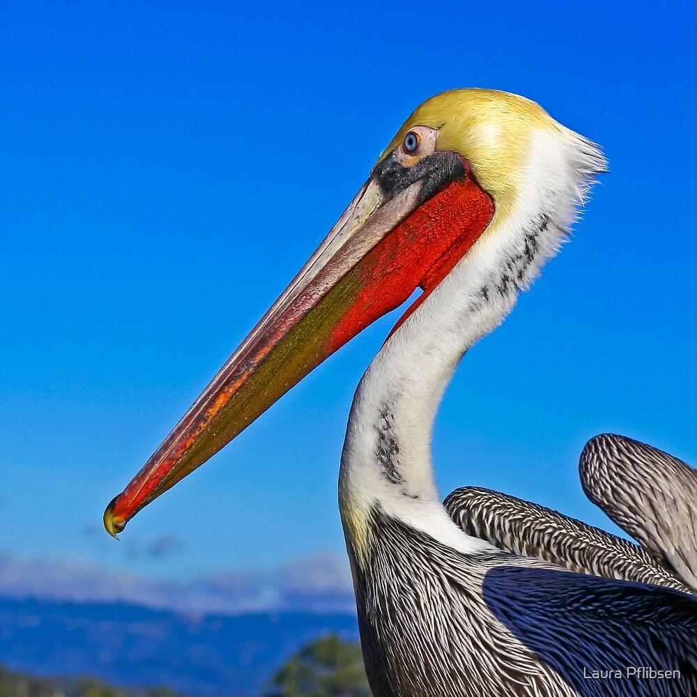 Pelican on the Wharf in Santa Cruz by Laura Pflibsen