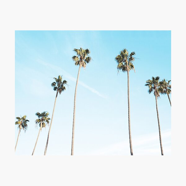 Palms print, Palm art, Minimalist Photographic Print