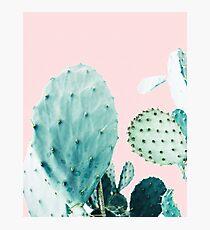 Lámina fotográfica Cactus, Cactus, Impresión de cactus, Arte de cactus, Desierto, Naturaleza, Planta, Minimalista, Moderno