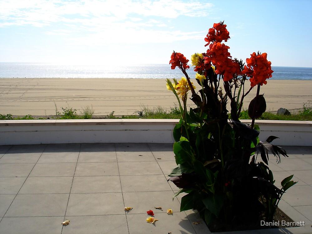 California colours by Daniel Barnett