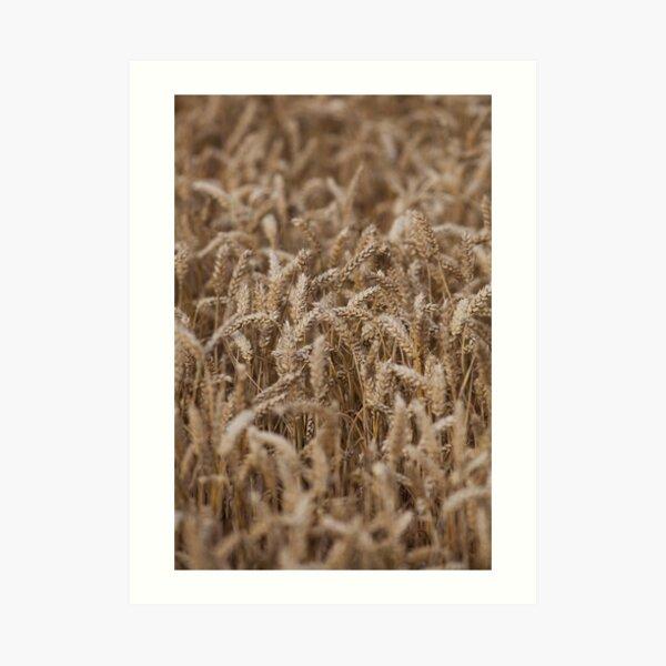 crops Art Print