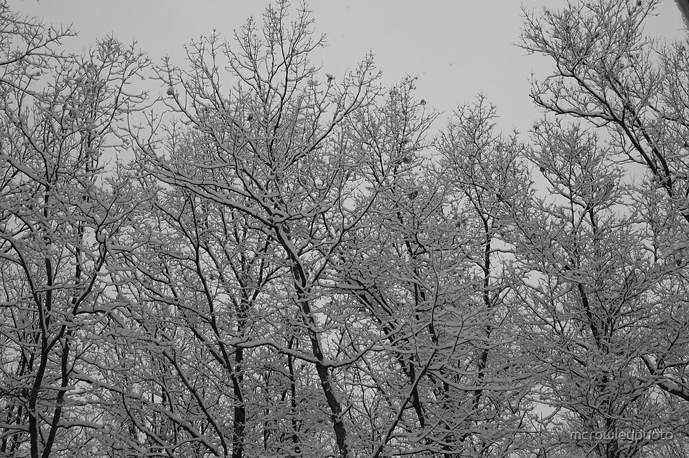 Snow Day by mcrowleyphoto
